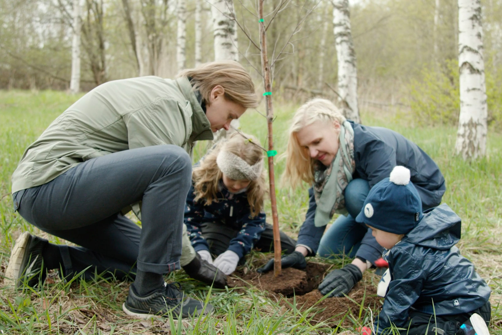 Family is planting a birch sapling.